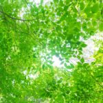 日本製の無添加ガーゼケット10年目レポート/使うほどにしっとりやわらか松並木